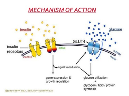 glucose-metabolism-insulin-7-638