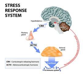 stress-diabetes